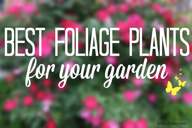Best Foliage Plants for Your Garden